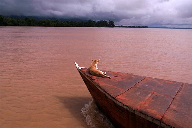 090722_005_メコン河と犬