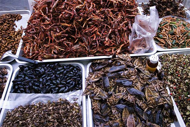 090730_004_昆虫料理