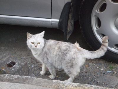 外猫 12