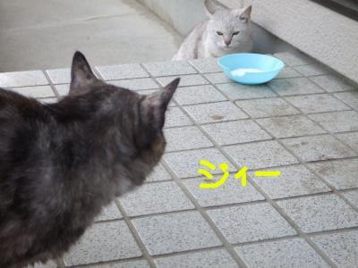 外猫 A1