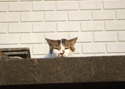 よその猫 2