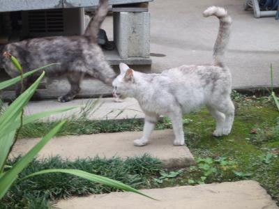 外猫 A2