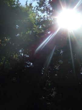 木漏れ日in三渓園