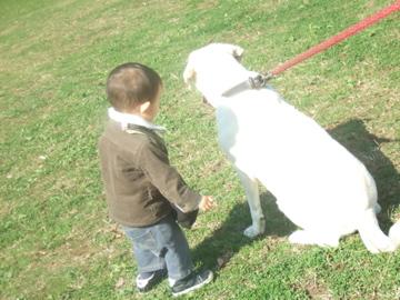 奏太朗と犬