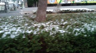 広島(雪)