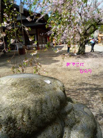 11_20090518231117.jpg