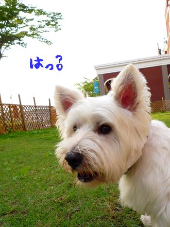 11_20090714220756.jpg