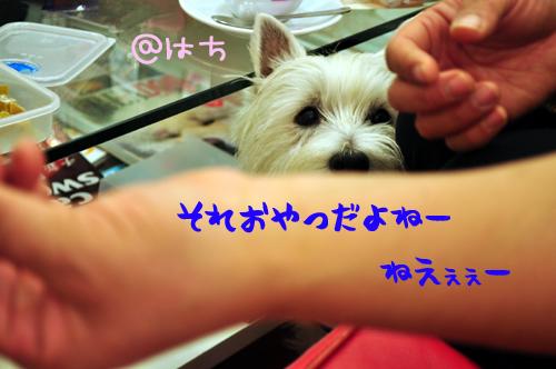 12_20100110234634.jpg