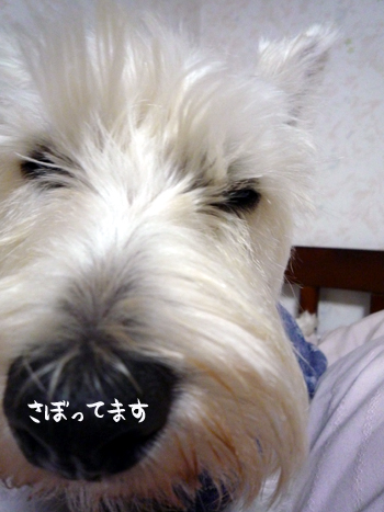 1_20090604000157.jpg