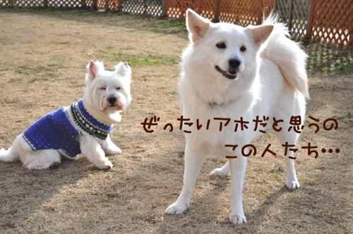 1_20100127003534.jpg