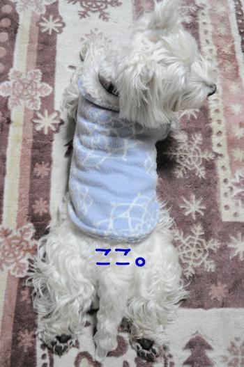 1_20100508000359.jpg