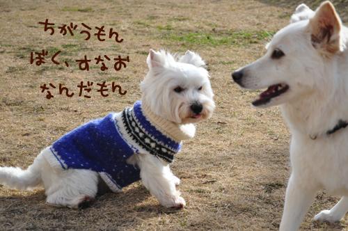 2_20100127003541.jpg