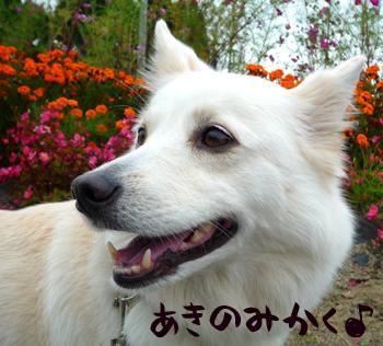 3_20091008221027.jpg