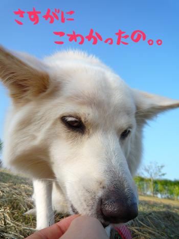 3_20091014222249.jpg