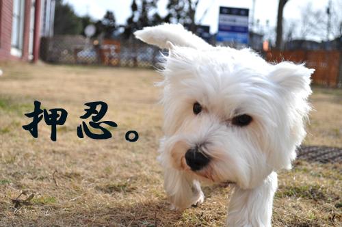 3_20100127003541.jpg