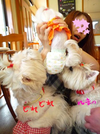 4_20090726232932.jpg
