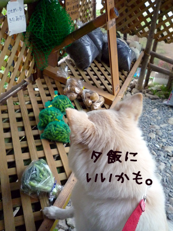 4_20091008221027.jpg