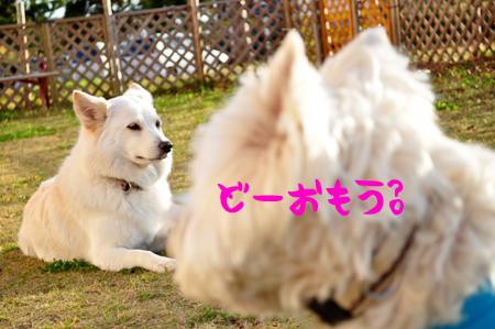 4_20091118224143.jpg