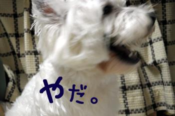4_20100204003216.jpg