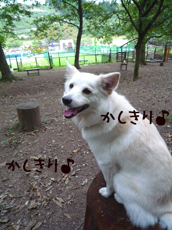5_20091008221027.jpg