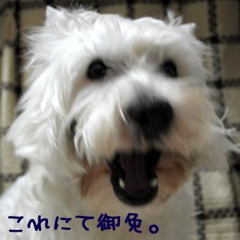 5_20100204003216.jpg