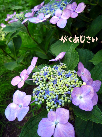 6_20090708235854.jpg