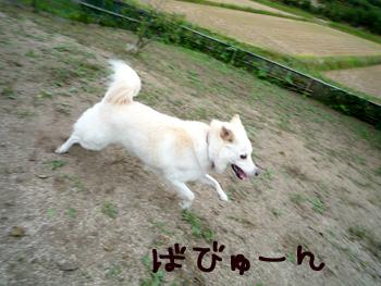 6_20091008221027.jpg