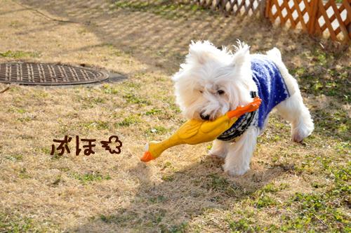 6_20100125213930.jpg