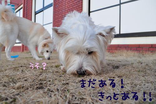 6_20100221233200.jpg