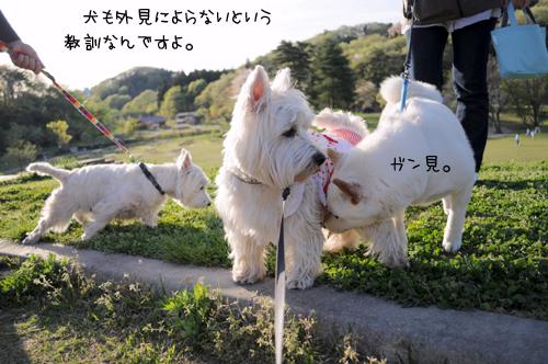 6_20100521225514.jpg