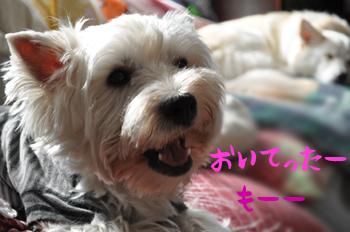7_20091018233834.jpg