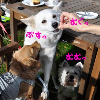7_20091030212728.jpg