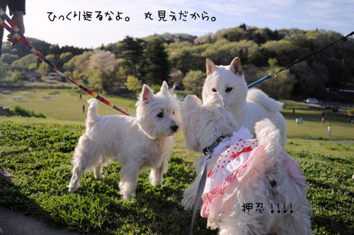 7_20100521230208.jpg