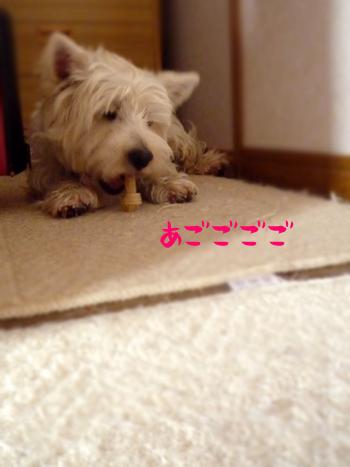 8_20090812211326.jpg