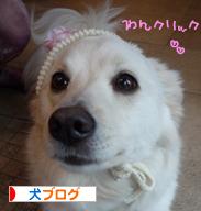 banner_20090325224927.jpg