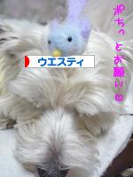 banner_20090408212441.jpg
