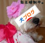 banner_20090508020711.jpg