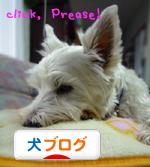 banner_20090605224811.jpg