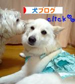 banner_20090607153943.jpg
