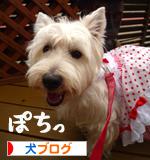 banner_20090624215542.jpg