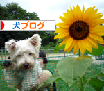 banner_20090830232318.jpg
