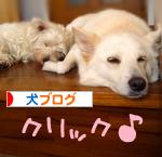 banner_20090916231652.jpg