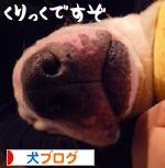 banner_20090925004958.jpg