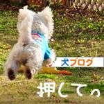 banner_20091116230816.jpg