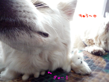 chu_20090328211610.jpg