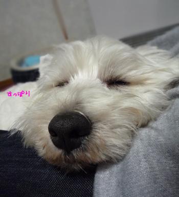 sleep_20090325224927.jpg
