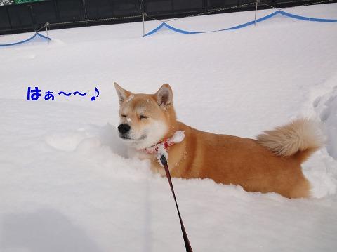 3gatunoyuki.jpg