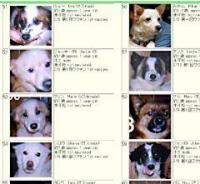 20060309-00000019-ryu-oki-thum-000.jpg