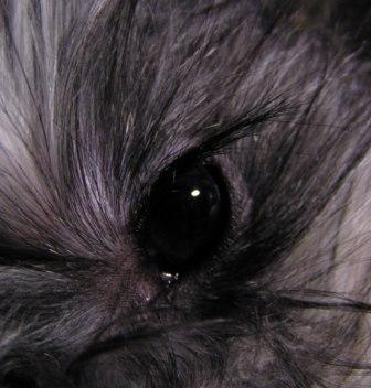 dogeye.jpg