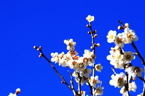 okayama-001013.jpg